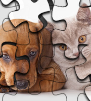 Cats vs. Dogs Puzzle